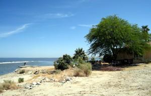 The Salton Sea beach at Salton City